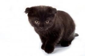 cat5_4.jpg